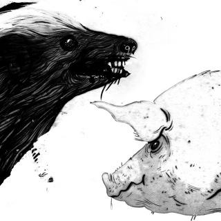 Honey Badger / Pig