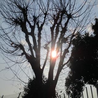 Sunbathe(Remastered)