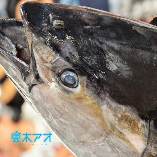 マグロ漁船青空丸