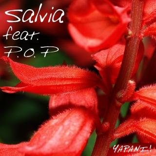 Salvia (feat. P.O.P)