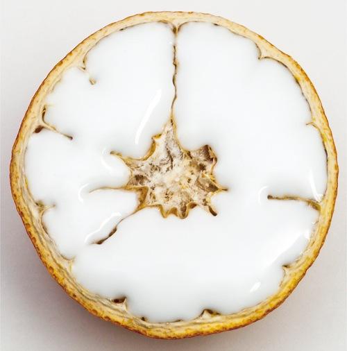 the milky tangerine『tuninglife』配信開始!