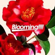 Blooming!!!!