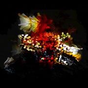The Bullnose Step EP(24bit/44.1kHz)