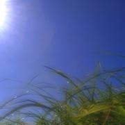 Cool Wind
