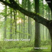 Togakushi Forest 戸隠の森