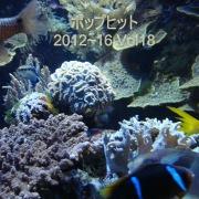 ポップヒット2012〜16 VOL18