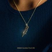 Gouldian Finch 02