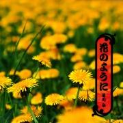 花のように