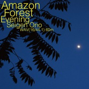 Amazon Forest Evening WAV60