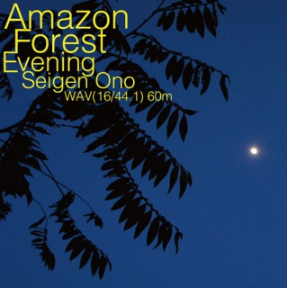 Amazon Forest Evening WAV60