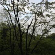 自然音 - 富士宮 - 野鳥01A#2 (バイノーラル)