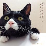 令和元年の猫たち ~秋元順子  愛をこめて~