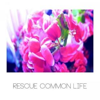 Resue Common Life