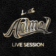 Animal (Live Session)