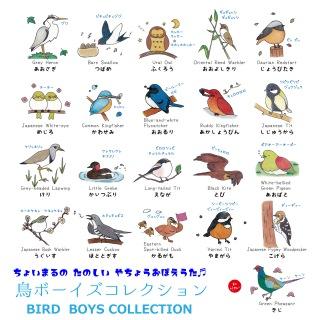 鳥ボーイズコレクション ~たのしい野鳥おぼえ歌~