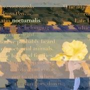 nocturnalis