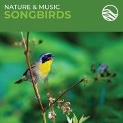 Nature & Music: Songbirds