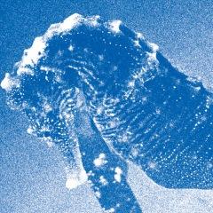 """【急上昇ワード】青葉市子、『""""Windswept Adan"""" Concert at Bunkamura Orchard Hall (Live)』で聴く神秘的な『アダンの風』の世界"""