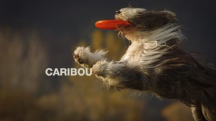 Caribouが待望の新曲「You Can Do It」をリリース & MV公開
