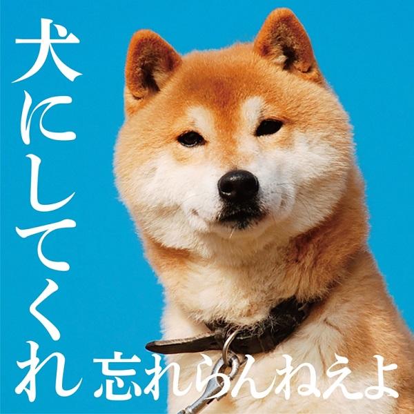 【本日!】忘れらんねえよ 『犬にしてくれ』MV公開&「ワッツアップ酒田」無料配信
