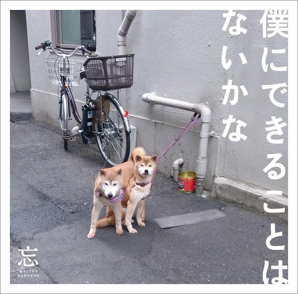 """忘れらんねえよ、ニューアルバム収録曲「花火」MVに""""浴衣限定""""エキストラを募集"""