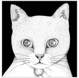 テンテンコ、新作はネコ・ソングのカバー・アルバム『ALL YOU NEED IS CAT~猫こそはすべて』、12月5日(水)リリースに先駆けアー写、ジャケ写&インストア・ライヴ情報も同時公開