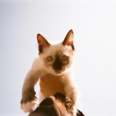 カネコアヤノ、配信シングル「腕の中でしか眠れない猫のように」をリリース